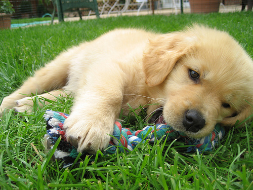 How to Treat Rickets Disease on Dogs and Puppies