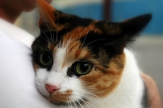 Cat Neutering: Should You Have Your Cat Neutered or Not?