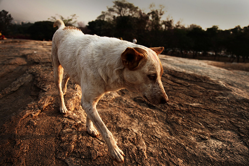 How to Get Rid of Fleas and Lice on Dogs