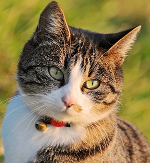 Common Diseases of Cats