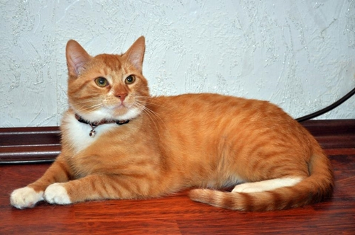 my tomcat was neutered