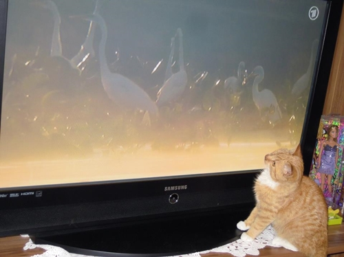cats TV entertainment