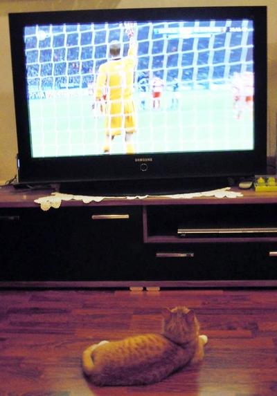 cats watch TV
