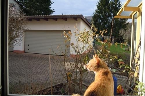 indoor cat venture outdoor first time1