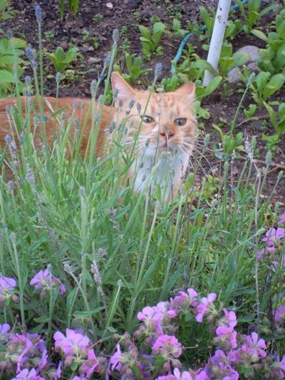 indoor cat venture outdoor first time12