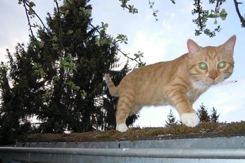 indoor cat venture outdoor first time16