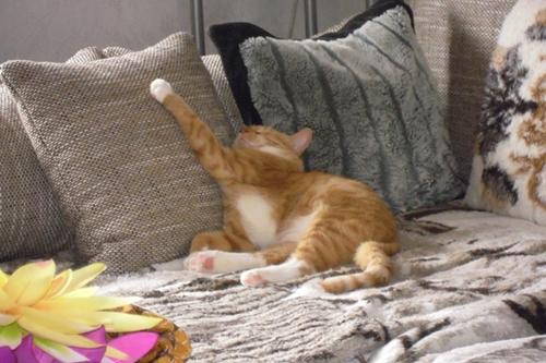 indoor cat venture outdoor first time17
